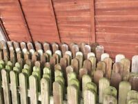 Large amount of picket fencing and three picket gates priced to sell