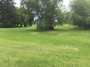 Willingdon, 2 large combined lots for sale
