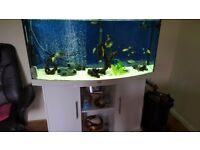 260 litre aquarium for sale!! Location: Watton, Norfolk