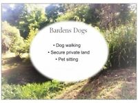 Dog walker and Pet sitter in East Grinstead. Fully insured and trained in animal first aid.