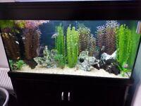 Aqua one reef 400 tank