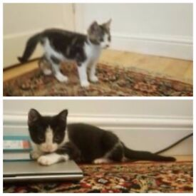 My 2 Beautiful Kittens For Sale (Vaccines Taken & with Health Certificates)