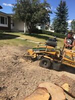 Chestermere , Calgary tree removal safety first