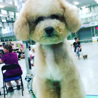 Professional Pet Stylist wanted