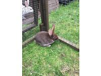 Bunnies 9 weeks old