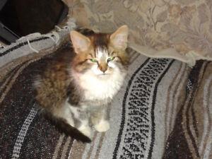 Magnifique chaton engoura