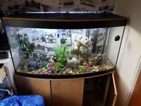 Fish tank complete set up 4ft