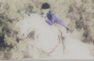 Young horse training services and riding lessons available!