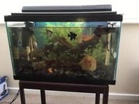 Perfect starter tropical tank 2ft