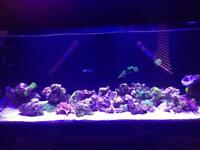 Marine tank breakdown