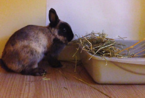 House bunny rabbits litter trained