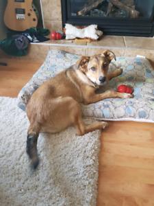 Dog friendly rental on west side