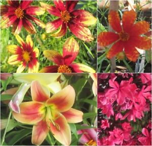 ALL PLANTS on SALE- Perennials & More-.75 CENTS & up| 25-70% Off