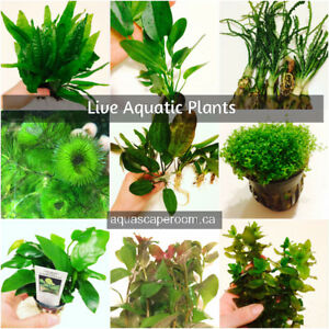 Live Aquarium Plants Shipped Right to your Door