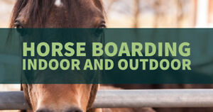 Trickle Creek Farms Horse Boarding is available to all levels