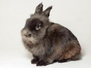 "Young Male Rabbit - Dwarf: ""Larry"""