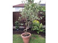 3 plants for sale