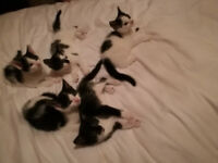 Kittens Looking For Loving Homes