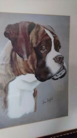 Boxer dog picture for sale