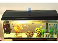 Reasonable fish tank