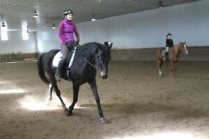Horseback riding lessons English and Western