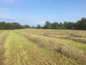Dry First Cut Hay