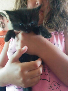 Kittens need new fur ever homes