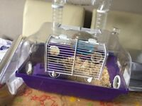 Hamster and all accessories cage etc