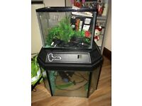 Fish Tanks 50L and 10L