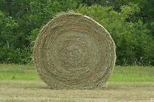 Round Hay Bales for sale (4' x 5')