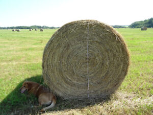 Hay for Sale  - Bjorkdale Area