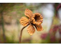 Daffodil Rusty metal plant supports