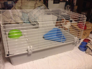 Gently Used Pet Accessories for Guinea Pigs, Rabbits, and more
