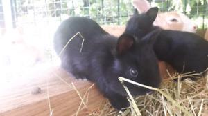 Tiny Bunnies!