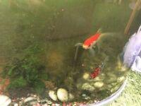95l fish tank aquarium with filter light fish etc