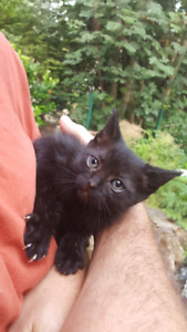 Kittens available to good home
