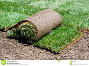 IM IN NEED OF ROLLS OF SOD ,,,IF YOU BOUGHT TO MANY