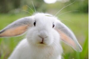 Are you unable to care for your rabbit?