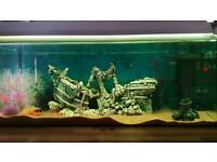 3ft Aquarium Fish Tank