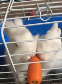 Looking for someone to look after my bunnies