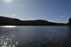 Terrain boisé pour chalet (Bord de lac)