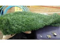 Artificial Hedging Roll