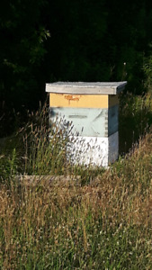 Complete beehive with all equipement