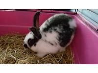 Baby bunnies 8 weeks old