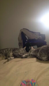 I'm moving to Edmonton and need a new home for my two cats