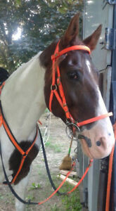TWH mare - endurance -  for part board