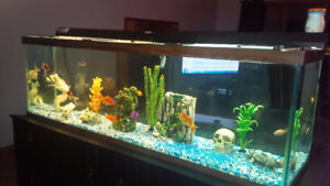 110 Gallon Fish Tank With Stand, Pump and Accessories