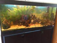 Fish tank , aquarium, filter and full stock included