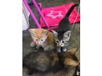 4 gorgeous kittens for sale