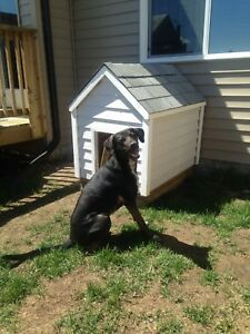 Large dog house - partially insulated